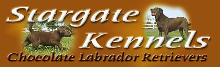 All Chocolate Labrador Retrievers, Breeding and Sales, Stargate Kennels